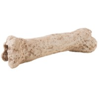 dinosaur-bone_high-resolution_pt2842