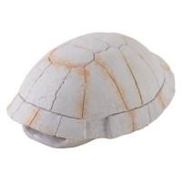 tortoise-skelleton_high-resolution_pt2927